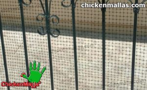 poultry net installed for chicken care